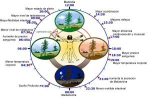 reloj-biologico-1