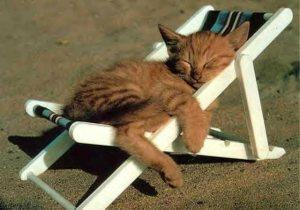 cat relax al sol