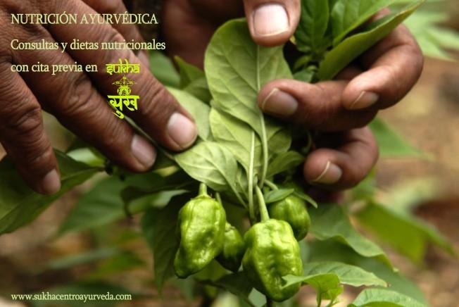 Nutrición Ayurvédica